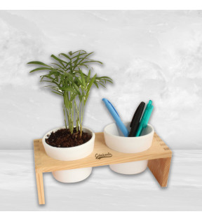 Plante publicitaire - Double pot de bureau