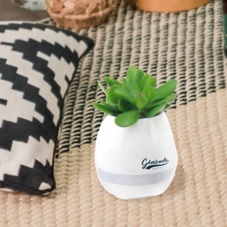Pot musicale personnalisable avec sa plante verte
