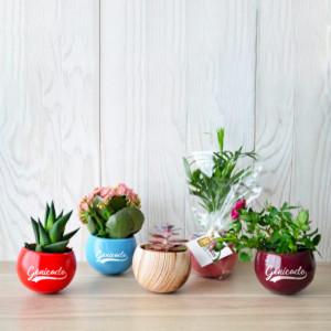Plante dépolluante publicitaire en pot aimanté