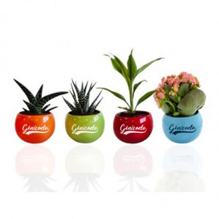Plante dépolluante en pot publicitaire aimanté