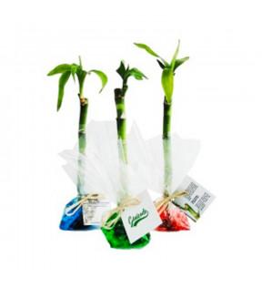 Bambou d'eau publicitaire