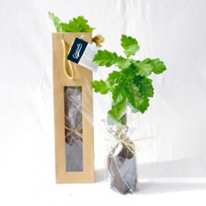 Plant arbre en sac kraft fenêtre - Feuillus