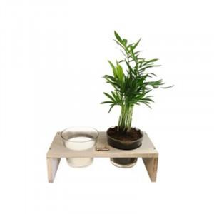 Double pot céramique et bois  Plante dépolluante